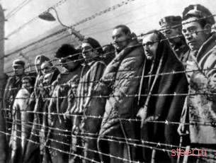 В немецких машинах использовали волосы узников Освенцима