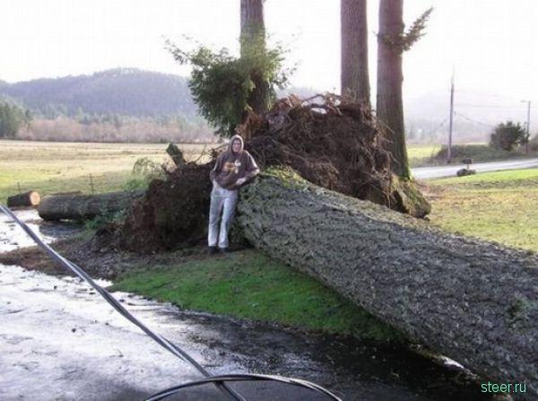 Одним деревом разбило все машины (фото)