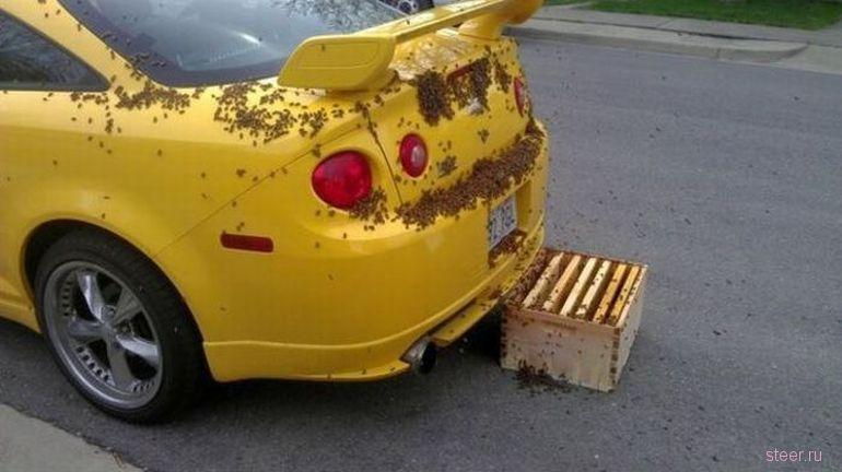 Chevrolet Cobalt SS облюбовали пчелы (фото)