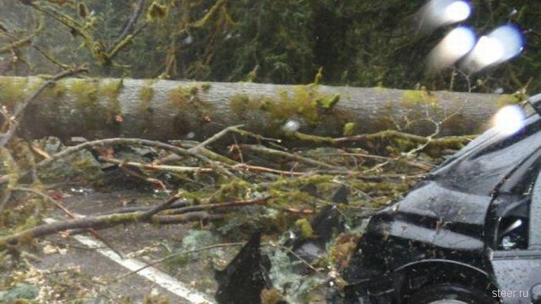 Крепкий кузов Subaru спас водителя от смерти (фото)