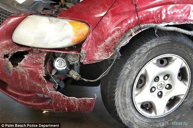 Что может сделать бультерьер с вашей машиной если... (фото)