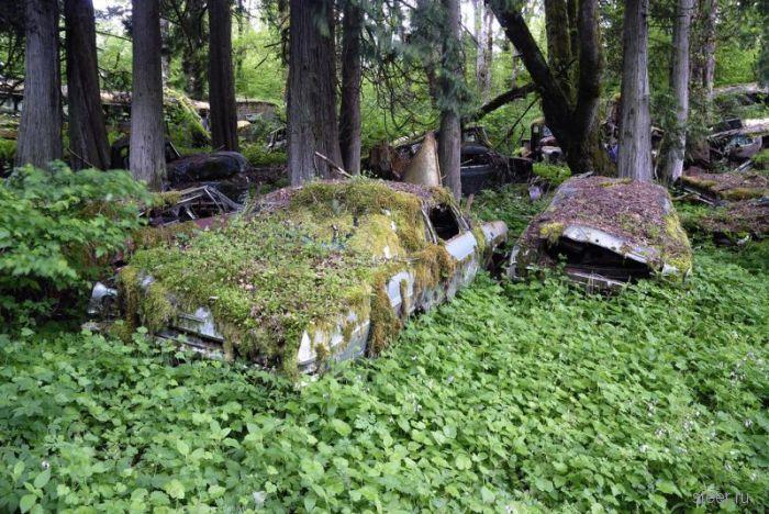 Автомобильное кладбище в лесу