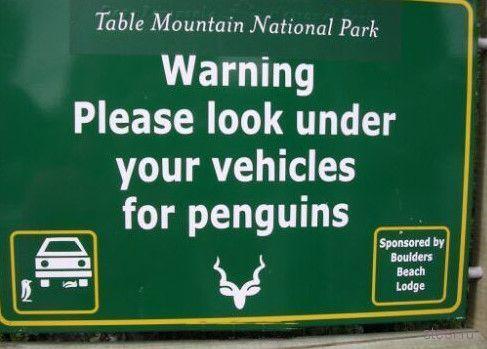 Дорожный юмор в ЮАР