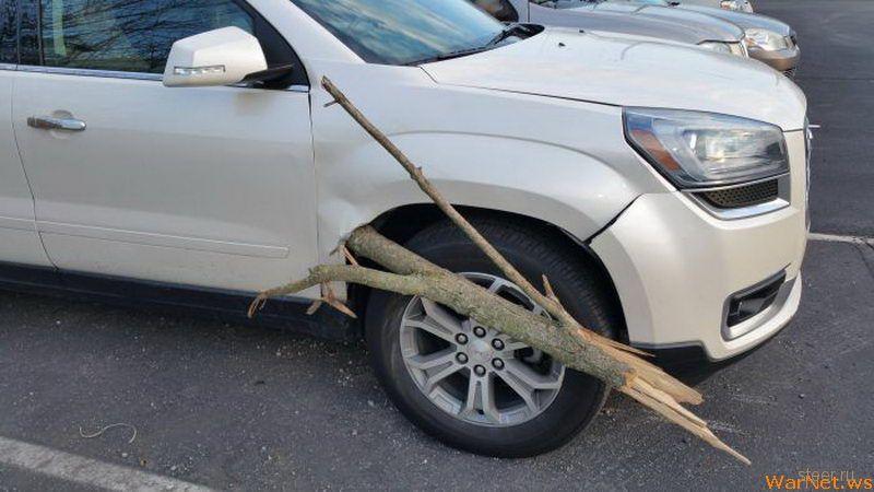 Ветка пронзила автомобиль