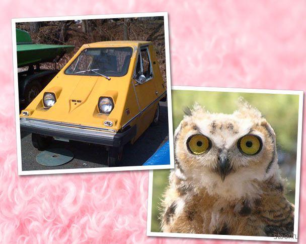 Степень похожести : машины и животные (фото)